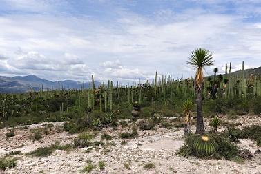 El bien representa la zona árida con mayor biodiversidad en el continente americano con altos niveles de endemismos, especies raras y amenazadas. Foto Mauricio Marat INAHJPG