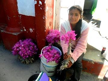 venta de orquideas silvestres en Tlaxiaco
